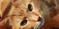 Katzenprodukte Test