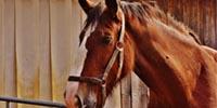 Pferdesattel Test