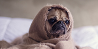 Hundemantel Test