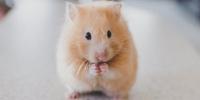Hamsterfutter Test