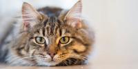 Futterautomat Katze Test