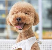 Hundeschermaschine