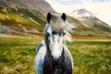 Beliebte Pferdenamen