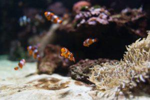 Aquarium Felsen