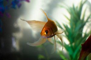 Aquarium Felsen Test