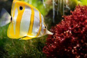 Aquarium Felsen Vergleich