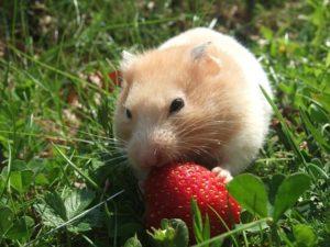 Hamsterfutter