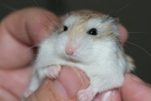 Hamsterfutter Vergleich