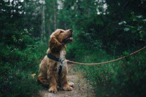 Hundegeschirr Test