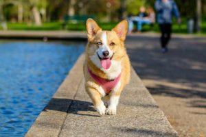 Hundegeschirr Vergleich