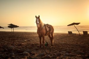 Pferdesattel Vergleich