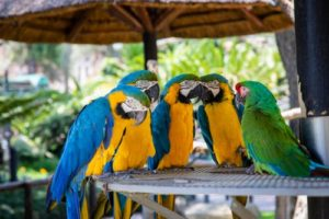 Vogelfutter Test