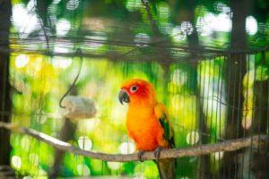 Vogelfutter Vergleich